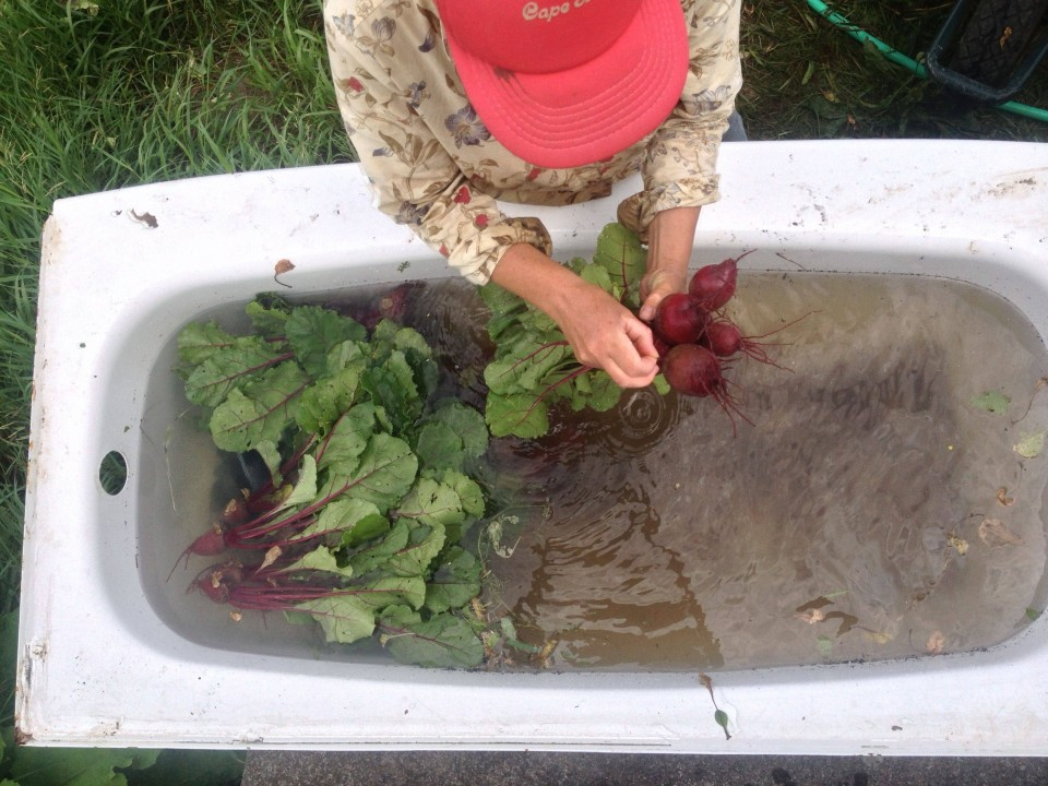 Knuckle Down Farm's Beet Bath